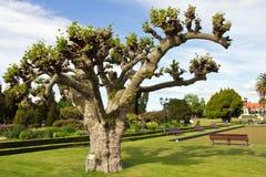 La Nuova Zelanda, il distretto di Rotorua, giardini di governo Immagini Stock Libere da Diritti