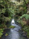 La Nuova Zelanda, insenatura nella foresta Fotografie Stock