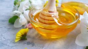 La nutrizione deliziosa floreale del miele della ciliegia dell'estate fresca del dessert sboccia movimento lento di gocciolamento archivi video