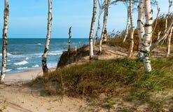 La onda del mar, tormenta en el mar, árboles de abedul por el mar, agita el lapping en la orilla, buque de carga en el mar Imagen de archivo