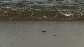 La onda reservada es incidente en la costa costa almacen de metraje de vídeo