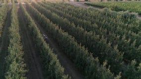 La opinión aérea sobre la familia rural da gesto positivo y sonríe en la huerta en la estación de la cosecha almacen de video