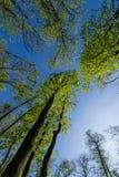 La opinión de Botttom sobre el verde fresco se va en los árboles en el bosque Imagen de archivo
