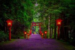 La opinión de la noche del acercamiento a la capilla de Hakone en un bosque del cedro con muchos linterna roja encendida para arr fotografía de archivo libre de regalías
