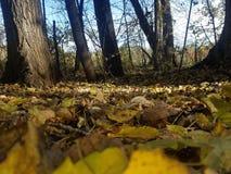 La opinión de maderas del bosque y de los lagos fotos de archivo libres de regalías