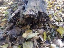 La opinión de maderas del bosque y de los lagos imágenes de archivo libres de regalías