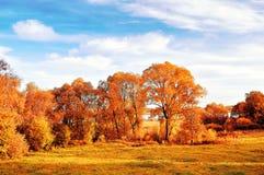 La opinión del otoño de la puesta del sol del parque del otoño se encendió por el sinlight La naturaleza del otoño paisaje-amaril Fotos de archivo