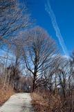 La opinión del parque del invierno con un rastro, los árboles y una inversión remontan en t Fotos de archivo
