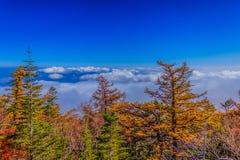 La opinión hermosa del paisaje del otoño con amarillo se va en el tr alto imagen de archivo