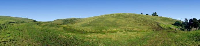 La opinión panorámica la hierba cubrió Rolling Hills Imagen de archivo