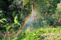 La opinión sobre el jardín floreciente con un arco iris en un día soleado fotografía de archivo libre de regalías
