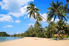 La opinión sobre las palmeras del coco en una playa arenosa cerca al mar en un fondo de un cielo azul Imagen de archivo libre de regalías