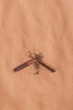 La opinión superior del cigarrillo quebrado, abandonó el fumar de concepto Foto de archivo