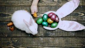 La opinión superior el muchacho alimenta el conejito de pascua por la zanahoria en una tabla de madera Preparación para la celebr almacen de video