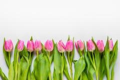 La opinión superior tulipanes rosados arregló en línea sobre el fondo blanco Copie el espacio Imagen de archivo