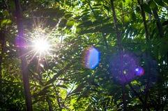 La opinión verde del bosque y la llamarada de la lente ponen verde el parque al aire libre natural del árbol Imágenes de archivo libres de regalías