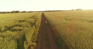 La opini?n a?rea sobre el muchacho joven, de que monta una bicicleta a trav?s de un campo de hierba del trigo en el camino rural  metrajes