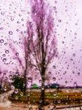 La opinión rosada de la ventana en la estación del otoño con agua cae el fondo sobre el vidrio Imagen de archivo libre de regalías