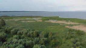 La orilla de la laguna del Vístula cubierta con precipitaciones almacen de video