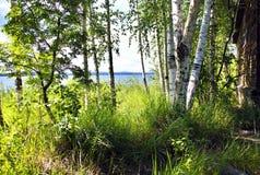 La orilla de un lago en verano Imagenes de archivo