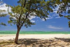 La orilla de una isla tropical con las palmeras y la arena blanca Fotos de archivo libres de regalías
