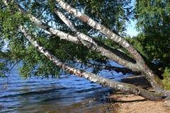 La orilla del lago Fotografía de archivo