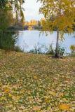 La orilla del lago con un pequeño abedul y hojas caidas en el fondo de una fuente y de un puente en la distancia Imágenes de archivo libres de regalías