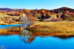 La orilla del lago del abedul blanco Fotos de archivo libres de regalías