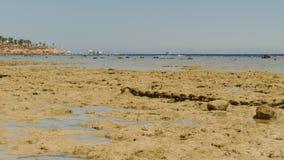 La orilla del Mar Rojo durante la bajamar almacen de video