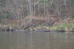 La orilla del río Imagen de archivo