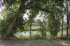 La orilla del río Imagen de archivo libre de regalías