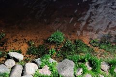 La orilla del río con la hierba y las piedras Imagen de archivo libre de regalías