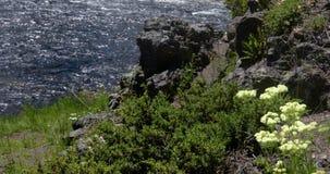 La orilla florece en un día ventoso 4k 24fps almacen de video