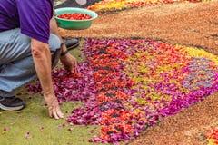 Free La Orotava, Tenerife, Spain - June 27, 2019. Beautiful Flower Carpets In La Orotava During Corpus Christi. Colorful Flower Petals Royalty Free Stock Photography - 176794077