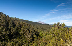La Orotava Valley of Teneriffe Royalty Free Stock Image