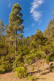 La Orotava Valley of Teneriffe Stock Images