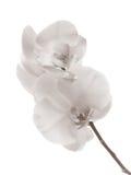 La orquídea Imágenes de archivo libres de regalías