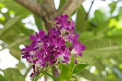 La orquídea Imagen de archivo