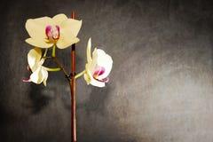 la orquídea amarilla está para la venta en la tienda Fotografía de archivo libre de regalías