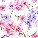 La orquídea azul y rosada florece en el fondo blanco Modelo floral inconsútil Pintura de la acuarela Ilustración drenada mano Foto de archivo libre de regalías