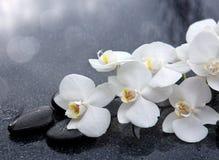 La orquídea blanca y las piedras negras se cierran para arriba Imagen de archivo