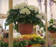 La orquídea colorida mecanografía adentro la floristería Foto de archivo