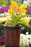 La orquídea de mariposa amarilla y el florero hermoso Imagen de archivo