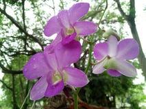 La orquídea es flor hermosa Fotografía de archivo libre de regalías