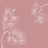 La orquídea florece el ejemplo como fondo del marco Imagen de archivo