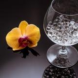 La orquídea florece en alto vidrio en bolas translúcidas del fondo negro Fotografía de archivo libre de regalías