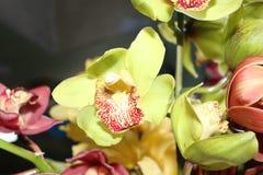 La orquídea florece a la hermana del norte natural la India del este siete de Gangtok Sikkim de la belleza Fotos de archivo