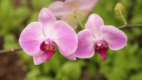 La orquídea florece soplar en el clip del hd del viento almacen de metraje de vídeo