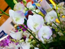 La orquídea hermosa de la floración suave del foco florece en parte posterior natural del jardín Foto de archivo