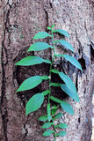 La orquídea sale de verde La selva de la selva tropical planta la flora natural Imagen de archivo libre de regalías